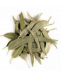 Herboristerie de Paris Eucalyptus feuilles longues entières bio tisane 100g