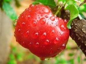 Naturland Acerola 1000 Tonus et Vitalité Vitamine C naturelle Pharma5avenue